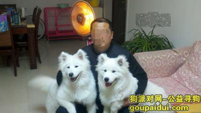 ,金色国际城第二次寻狗启示,它是一只非常可爱的宠物狗狗,希望它早日回家,不要变成流浪狗。