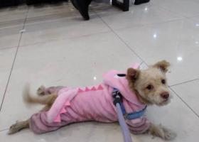 寻狗启示,在2018年3月23号中午在沙湾的美女雕像附件丢失,它是一只非常可爱的宠物狗狗,希望它早日回家,不要变成流浪狗。