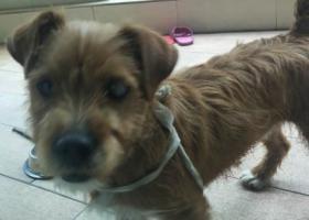 寻狗启示,四川省遂宁市船山区吴家湾附近捡到狗,脖子上有项圈。,它是一只非常可爱的宠物狗狗,希望它早日回家,不要变成流浪狗。