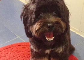 寻狗启示,好心塞,宝贝丢了,虽然不是名种犬,但它是我们的家人,黑色串串一只,它是一只非常可爱的宠物狗狗,希望它早日回家,不要变成流浪狗。