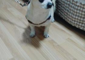 寻狗启示,寻狗启示(狗狗名字叫乐乐),它是一只非常可爱的宠物狗狗,希望它早日回家,不要变成流浪狗。