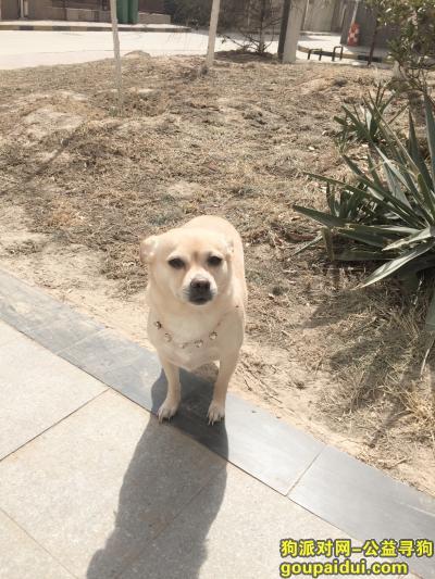寻狗启示,求好心人帮帮忙!!!重谢!,它是一只非常可爱的宠物狗狗,希望它早日回家,不要变成流浪狗。