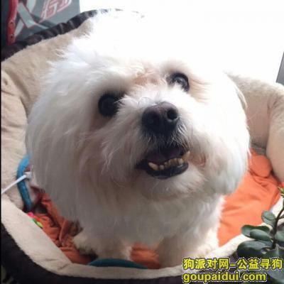 【郑州找狗】,寻找心爱的狗狗,谢谢好心人,它是一只非常可爱的宠物狗狗,希望它早日回家,不要变成流浪狗。