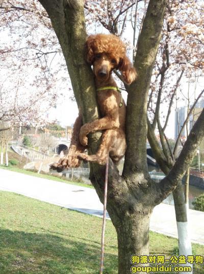 广安寻狗启示,希望能找我的狗狗儿,每天都在找你,它是一只非常可爱的宠物狗狗,希望它早日回家,不要变成流浪狗。