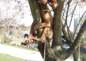 寻狗启示,希望能找我的狗狗儿,每天都在找你,它是一只非常可爱的宠物狗狗,希望它早日回家,不要变成流浪狗。