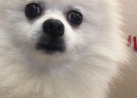 寻狗启示,3月27号走丢,希望大家帮忙找一下,它对我很重要,它是一只非常可爱的宠物狗狗,希望它早日回家,不要变成流浪狗。