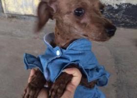寻狗启示,狗狗在安岳交警队走丢半个月了,不知道还能找回来吗,它是一只非常可爱的宠物狗狗,希望它早日回家,不要变成流浪狗。