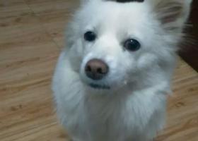 寻狗启示,寻找丫丫,失踪快四个多月了,它是一只非常可爱的宠物狗狗,希望它早日回家,不要变成流浪狗。