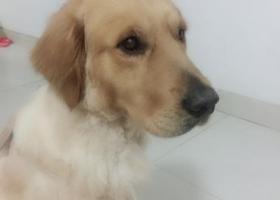 寻狗启示,狗狗叫麦麦丢失在朱岗,它是一只非常可爱的宠物狗狗,希望它早日回家,不要变成流浪狗。