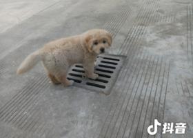 寻狗启示,我们家的狗狗走丢了请帮帮忙,它是一只非常可爱的宠物狗狗,希望它早日回家,不要变成流浪狗。