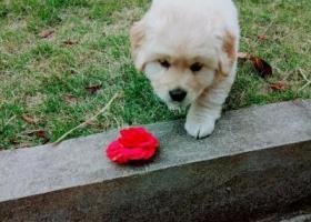 寻狗启示,我家的狗狗走丢了请帮帮忙,它是一只非常可爱的宠物狗狗,希望它早日回家,不要变成流浪狗。
