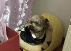 寻狗启示,土豆快回家吧 我等你多久都等 好心人帮忙找到重谢!,它是一只非常可爱的宠物狗狗,希望它早日回家,不要变成流浪狗。