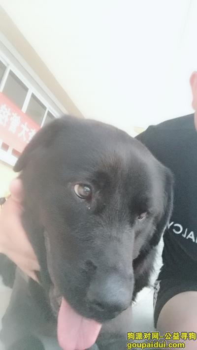株洲寻狗主人,谁的狗,我从狗贩子手上买的,它是一只非常可爱的宠物狗狗,希望它早日回家,不要变成流浪狗。