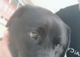 寻狗启示,谁的狗,我从狗贩子手上买的,它是一只非常可爱的宠物狗狗,希望它早日回家,不要变成流浪狗。