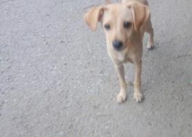 寻狗启示,失,它是一只非常可爱的宠物狗狗,希望它早日回家,不要变成流浪狗。
