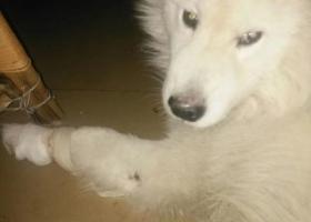 寻狗启示,射洪县城北二小区寻狗启示,它是一只非常可爱的宠物狗狗,希望它早日回家,不要变成流浪狗。