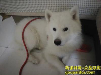遂宁寻狗启示,射洪县城北二小区寻狗狗启示,它是一只非常可爱的宠物狗狗,希望它早日回家,不要变成流浪狗。