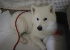 寻狗启示,射洪县城北二小区寻狗狗启示,它是一只非常可爱的宠物狗狗,希望它早日回家,不要变成流浪狗。