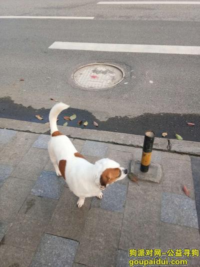 黔东南寻狗启示,我家狗于4月5日在贵州省镇远县烈士陵园丢失 有线索的麻烦联系我们谢谢!,它是一只非常可爱的宠物狗狗,希望它早日回家,不要变成流浪狗。
