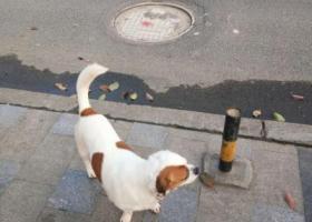 我家狗于4月5日在贵州省镇远县烈士陵园丢失 有线索的麻烦联系我们谢谢!