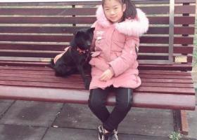 寻狗启示,纯种小黑狗戚墅堰圩墩车站附近丢失。,它是一只非常可爱的宠物狗狗,希望它早日回家,不要变成流浪狗。