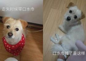 武汉市硚口区丰美路酬谢一千元寻找小土狗