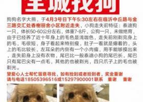寻狗启示,临沂市兰山区香榭丽舍小区酬谢五千元寻找泰迪,它是一只非常可爱的宠物狗狗,希望它早日回家,不要变成流浪狗。