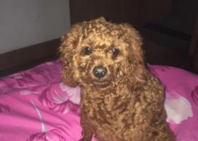 寻狗启示,昨天上午10点左右在怀德苑小区走失,它是一只非常可爱的宠物狗狗,希望它早日回家,不要变成流浪狗。