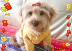 寻狗启示,金毛串串4.6日下午三点莞城花街家乐福附近走失,它是一只非常可爱的宠物狗狗,希望它早日回家,不要变成流浪狗。