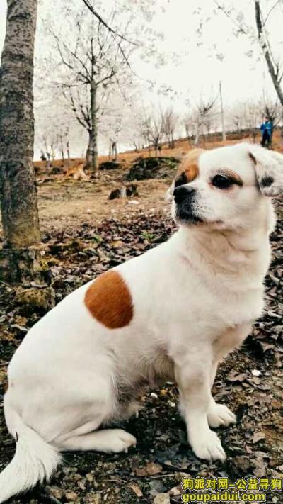 黔西南找狗,贵州省镇远县烈士陵园悬赏一万寻找爱犬,它是一只非常可爱的宠物狗狗,希望它早日回家,不要变成流浪狗。