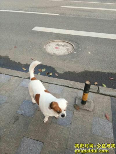 黔东南找狗,#寻狗启示#2018年4月5日中午1点左右在贵州省镇远县烈士陵园附近丢失!,它是一只非常可爱的宠物狗狗,希望它早日回家,不要变成流浪狗。