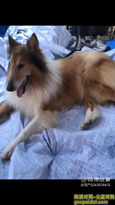 义乌找狗主人,有丢失狗狗的朋友看看,它是一只非常可爱的宠物狗狗,希望它早日回家,不要变成流浪狗。