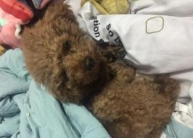 寻狗启示,在杭州临平第五人民医院后面的小区里丢的,它是一只非常可爱的宠物狗狗,希望它早日回家,不要变成流浪狗。