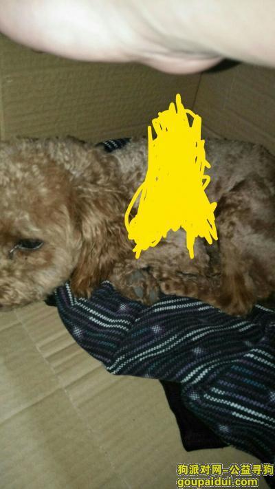 宁波捡到狗,北仑区中医院附近捡到,它是一只非常可爱的宠物狗狗,希望它早日回家,不要变成流浪狗。