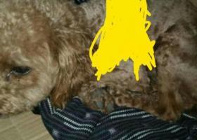 寻狗启示,北仑区中医院附近捡到,它是一只非常可爱的宠物狗狗,希望它早日回家,不要变成流浪狗。