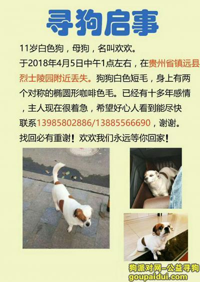 黔东南寻狗网,#寻狗启事#我家狗狗在镇远县烈士陵园附近丢失走失!,它是一只非常可爱的宠物狗狗,希望它早日回家,不要变成流浪狗。