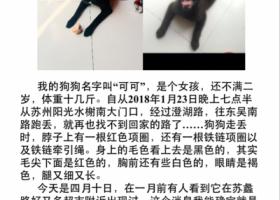 寻狗启示,酬金三千元《寻找爱犬》,它是一只非常可爱的宠物狗狗,希望它早日回家,不要变成流浪狗。