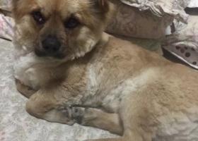 寻狗启示,寻找走失狗狗名叫胖胖,它是一只非常可爱的宠物狗狗,希望它早日回家,不要变成流浪狗。