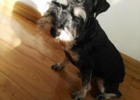 寻狗启示,青岛西镇捡到的小狗,大约十来斤,它是一只非常可爱的宠物狗狗,希望它早日回家,不要变成流浪狗。