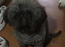 寻狗启示,寻找狗狗。名叫旺仔1122,它是一只非常可爱的宠物狗狗,希望它早日回家,不要变成流浪狗。