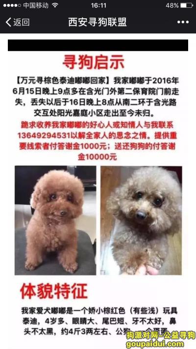 寻狗启示,万元寻棕红色玩具泰迪嘟嘟,它是一只非常可爱的宠物狗狗,希望它早日回家,不要变成流浪狗。
