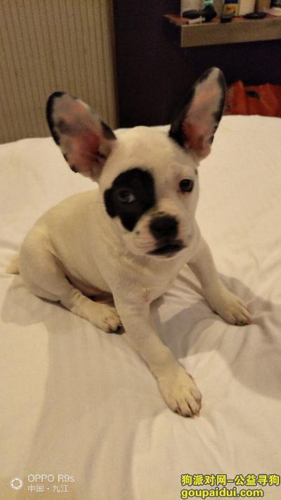 寻狗启示,请大家理解一个失去狗狗的铲屎官的痛苦心情!,它是一只非常可爱的宠物狗狗,希望它早日回家,不要变成流浪狗。