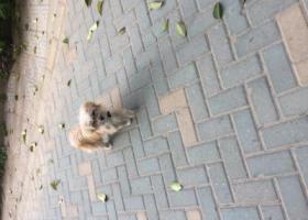 寻狗启示,滨江花园附近一只小金毛,它是一只非常可爱的宠物狗狗,希望它早日回家,不要变成流浪狗。