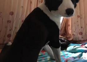 寻狗启示,2000元悬赏找狗。浦东大道,它是一只非常可爱的宠物狗狗,希望它早日回家,不要变成流浪狗。