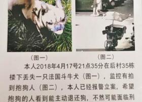 寻狗启示,狗被偷走了,图上的2个人 义乌市青口后村27栋,它是一只非常可爱的宠物狗狗,希望它早日回家,不要变成流浪狗。