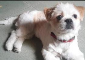 寻狗启示,寻找我的家人(东莞市中堂镇),它是一只非常可爱的宠物狗狗,希望它早日回家,不要变成流浪狗。
