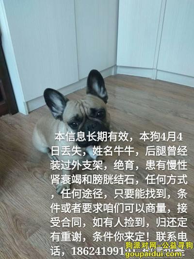 辽阳寻狗启示,4月4日在教委小区辽阳市老人护养中心院内跑丢!重谢!,它是一只非常可爱的宠物狗狗,希望它早日回家,不要变成流浪狗。