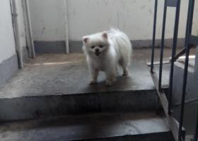 寻狗启示,寻找狗狗,母,于4月16号走失,它是一只非常可爱的宠物狗狗,希望它早日回家,不要变成流浪狗。