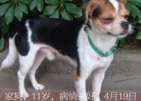 寻狗启示,福州市晋安区,求助,狗狗丢失,有看到它的,请联系我。,它是一只非常可爱的宠物狗狗,希望它早日回家,不要变成流浪狗。