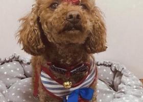寻狗启示,爱狗4月11日走失在淞虹路地铁站附近,它是一只非常可爱的宠物狗狗,希望它早日回家,不要变成流浪狗。